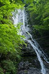 Green photo (SnowBall_Photography) Tags: 秩父郡 埼玉県 日本 jp