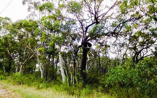 536 Bushells Ridge Road, Wyee NSW