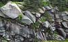Thunderhead Sandstone (Neoproterozoic; Clingmans Dome, Great Smoky Mountains, North Carolina, USA) 19 (James St. John) Tags: thunderhead sandstone precambrian proterozoic neoproterozoic clingmans dome great smoky mountains national park north carolina