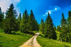 The path in the mountains (artupp) Tags: mountain rock height vegetation nature altitude blooming spring sky cloud wild landscape montagne roche hauteur floraison printemps ciel nuage sauvage paysage sapin chemin
