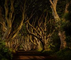 Grace (Good News Snaps) Tags: beech antrim avenue grace darkhedges goodnewssnaps trees gracehill