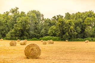 Field of Hay [Explored on 8/7/17]