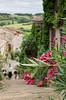 IMGP0790 (fLobOOk) Tags: cordes sur ciel cordessurciel aveyron tarn village médiéval histoire chien chat france europe garonne tarnetgaronne