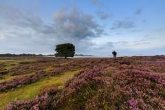 Heath feaver part 4   #Heidekoorts 4 (nldazuu.com) Tags: zonsopkomst plankwambuis wolkenlucht heath gelderland bos clouds regenbui hei zonsopgang bomen oudreemst heide zuidveluwe heather natuurmonumenten wolken sunrise explore