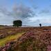 Heath feaver part 4 | #Heidekoorts 4