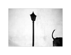 Viñales. 2003 (José Luis Cosme Giral) Tags: viñales2003 bw scanned dog minimalism moments
