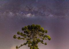 Araucaria (ruimc77) Tags: nikon d810 nikkor afs 1835mm f3545g ed araucaria tree milky way árvore arvore araucária via lactea láctea galaxy galaxia galáxia piracaia sp sao são paulo brasil brazil noite noturna noche nocturna night noctural astro astrophotography astrophotografia astrophotografía serra ecovila clareando ecovillage mantiqueira astrometrydotnet:id=nova2198029 astrometrydotnet:status=failed