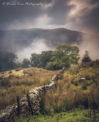 Follow The Wall (.Brian Kerr Photography.) Tags: cumbria lakedistrict landscapephotography kirkstonepass briankerrphotography briankerrphoto landscape wall trees mistymorning troutbeck lakes a7rii availablelight sony formatthitech nature naturallandscape natural outdoor outdoorphotography opoty moody atmosphere fe2470mmf28gm