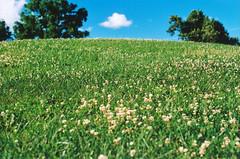 Summertime Rolls (Jetcraftsofa) Tags: pentaxsp helios442 ultarmax400 35mm summertime janesaddiction cloverfield spotmatic polarizer grasshill filmphotography