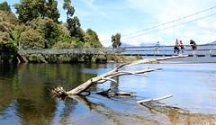Arnold River, Moana (Grey Albatross) Tags: moana lakebrunner rakaitanewalk arnoldriver greyriver tasmansea greymouth westcoast southisland newzealand