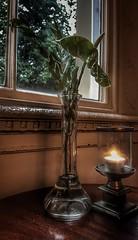 Tea light (I line photography) Tags: tealight window glass windowframe plant leaves vase decoration reflection candleholder thebelsfieldhotel lakedistrict hotel ilinephotography petephillips
