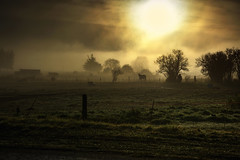 Horses in the mist (Kevin_Jeffries) Tags: light august newzealand horses kevinjeffries nikon nikkor d7100 golden atmospheric tree fence day winter fog