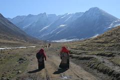 IMG_0676 (y.awanohara) Tags: kailash kora kailashkora ngari tibet may2017 yawanohara