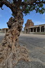 Vitthala Temple, Hampi (srikanthsamaga) Tags: hampi karnataka nammakarnataka india incredibleindia sculpture ancient temple history vijayanagara ruins tree frangipani oldtree wlm2017 flickrphotowalk