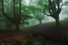 Never go alone (Hector Prada) Tags: bosque niebla rio hayedo arbol hojas misterioso encantado mágico oscuro verano forest fog mist river tree leaves misterious enchanted magic dark summer creepy charmed paísvasco basquecountry woods leaf