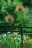 Arboretum-09486-Edit.jpg (Dr. JS Photography) Tags: graden newjersey color flower summit bloom reevesreedarboretum arboretum landscape