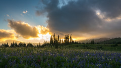 DSC04836 (www.mikereidphotography.com) Tags: wildflowers rainier mountain sunset landscape forest sky clouds lupine paintbrush meadow