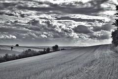 Fin d'été. (@phr_photo) Tags: summer été nuage cloud storm orage paysage landscape campagne country land france sudouest blackandwhite noiretblanc
