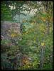 A rock in the woods (Steve4343) Tags: nikon d70s backbone rock backbonerock damascus virginia shady valley tennessee woods forest green yellow trees steve4343