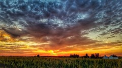 above the fruited plain... (BillsExplorations) Tags: clouds country rural sunrise field corn illinois midwest dusk evening awesome wonder snapseed countrysky farm americathebeautiful plain