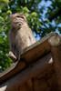 Rhenen - Ouwehands Zoo 2017-8519 (Quistnix!) Tags: 2017 ouwehandszoo dierenpark zoo
