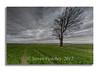 Tree In A Field (Steven Peachey) Tags: landscape sky clouds field farmland tree crops canon ef1740mmf4l canon6d lee09gnd leefilters stevenpeachey lightroom exposure