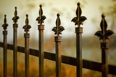 D.O.Fence (Ian Sane) Tags: ian sane images dofence wrought iron fence gazebo park oldtown florence oregon fencefriday perspective dof depthoffield canon eos 5ds r camera ef50mm f14 usm lens