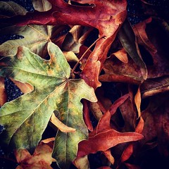 Summer Leaves (Robert_Brown [bracketed]) Tags: robertbrown photography instagram squareformat color deadleaves leaves abstract summer fall autumn nature portland oregon pacific northwest nw