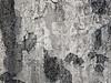 壁 WALL (SHIBATA KEN) Tags: japan 日本 tokyo 東京 wall 壁 texture テクスチャー