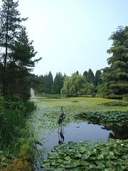 Heron Lake, Van Dusen Gardens (Ruth and Dave) Tags: heronlake vandusen botanicalgarden vancouver vandusengardens lake pond heron sculpture two birds lilies lilypond waterlilies yellow flower garden