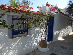 Alonnisos Greece (lesleydugmore) Tags: house outside exterior door planet pot blue white flower greece alonnisos northern sporades greekisland