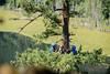 EOG-30.jpg (Joel Spooner Photography) Tags: arblife arborist bc expeditionoldgrowth joelspooner joeliphoto climbtrees exploretrees explorebc inspire learntoclimb oldgrowth treeclimbing