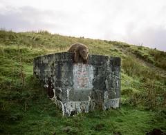 The Bwlch, Wales, 2017 by Dan_wood - Instagram: @danwoodphoto