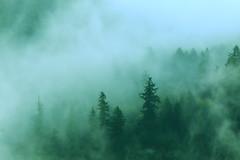 Fog (Steve Kletzi) Tags: fog forest saar loop saarschleife wald baum tree bäume trees nebel morgen mist