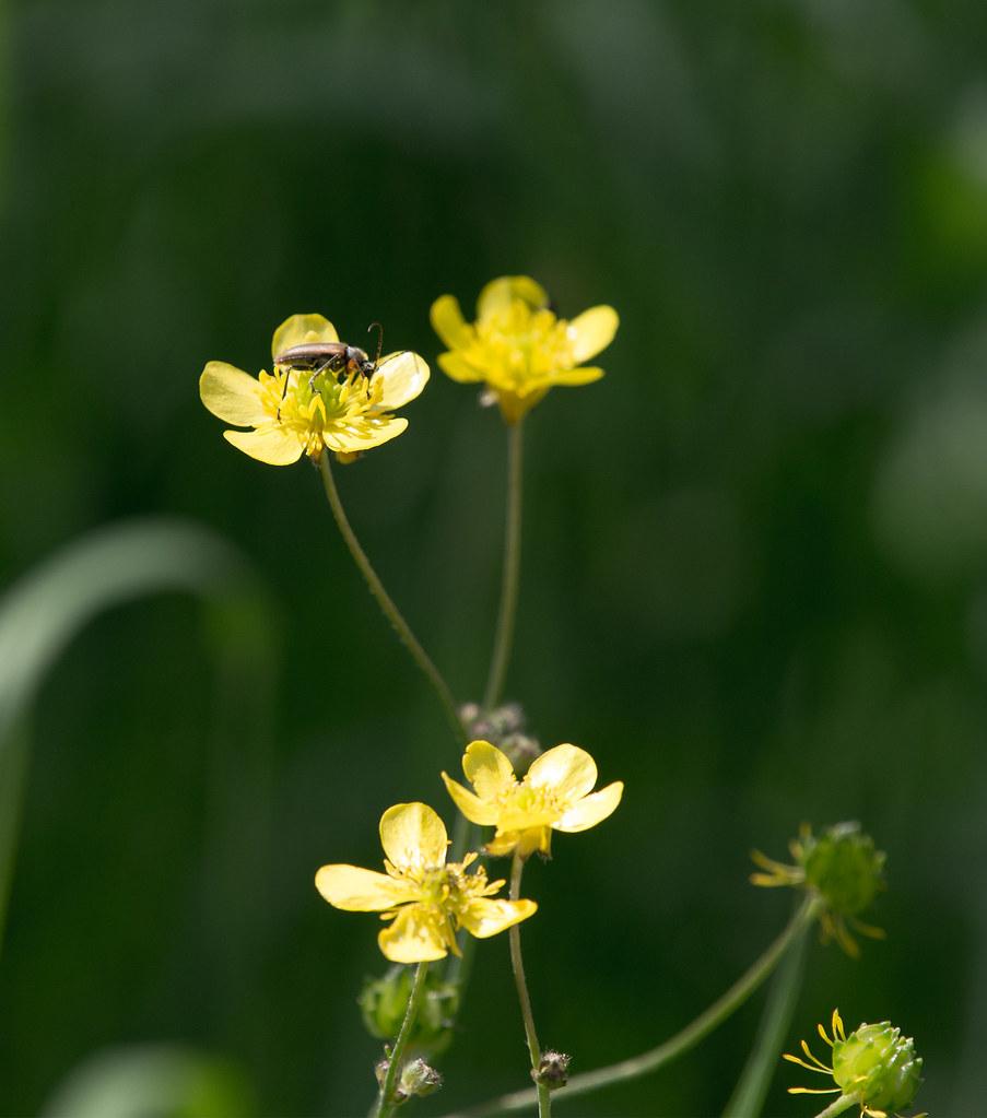 фото: Bug on yellow