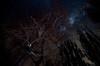 Universo (Felipe Rojas Santander) Tags: milkyway night sky stars cajondelmaipo chile nature
