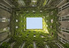 Looking Up (CoolMcFlash) Tags: building patio innercourtyard symmetry architecture vienna old window facade pov pointofview perspective sky fujifilm xt2 gebäude innenhof symmetrie geometry geometrie architektur wien alt fenster fassade blickwinkel lowangleview perspektive himmel fotografie photography city stadt xf 1024mm f4 r ois green grün plant pflanze