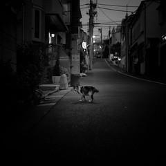 night walk/夜の散歩 (s_inagaki) Tags: night walk cat slope tokyo snap monochrome blackandwhite bnw bw 夜 散歩 東京 猫 坂 スナップ モノクロ 白黒