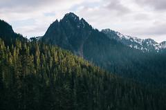 (JuanCarViLo) Tags: national park mount rainier mountain wilderness green trees fair wild sunset