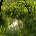 El sol a través del agua