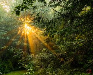 Sun Rays in the Trees