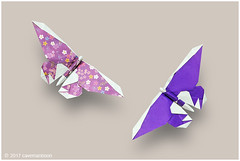 Butterfly (Koh) (cavemanboon*) Tags: origami butterflies ronaldkoh cavemanboon singapore malaysia 折り紙 ロナルド・コウ 蝶々 チョウ boon 羅納德・許 罗纳德・许 paperfolding