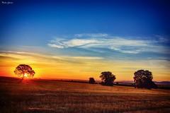 Oak field at sunrise (Peideluo) Tags: puestadesol campo cielo paisaje árbol amanecer sunrise nikonflickraward elitegalleryaoi bestcapturesaoi