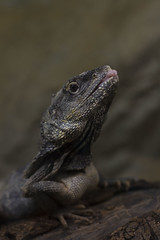 Grasp (Milena Galizzi) Tags: animal nature reptile fauna lizard movement long exposure fish sealife wildlife pet chameleon transormism mimesis
