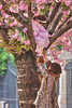 Spring in pink tones (Dmitry Yelloff) Tags: france paris europe european city town urban streets exterior outdoor woman girl people spring tree leopardcoat help descend ground pink flowers children child childhood game climb bark hand assist branches cherry blossom