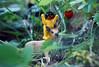fraise-à-la-roulotte (★ ♥ Pounkie ☠ †) Tags: playmobil laroulotte bébéplaymobil playmobilbaby playmobilkid jouets toys bambi faon deer daim bichon fawn jouet toy animal heckleoujeckle heckleetjeckle petitbichon fraiseàlaroulotte