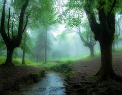OTZARRETAKO ERREKA1 (juan luis olaeta) Tags: otzarreta landscape paisages forest bosque basoa canoneos60d sigma1020 photoshop lightroom brumas laiñoa fog bizkaia basquecountry euskalherria