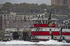 r_170903281_beat0053_a (Mitch Waxman) Tags: 2017greatnorthrivertugboatrace 42ndstreet buchanan donjon fireboatjohnjharvey hudsonriver midtown millerslaunch mistert newyorkcity newyorkharbor tugboat workingharborcommittee newyork
