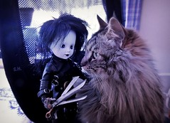 A free Haircut for Kitty (pianocats16) Tags: edward scissorhands living dead dolls tim burton doll cat kitty fluffy cute haircut