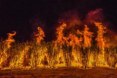 Sugar Cane Fire - Childers (2) (Cisc Pics) Tags: sugarcane fire childers queensland australia childersfestival isiscentralsugarmill tour blaze flames night nikon nikkor dx d7000 1024mm iso